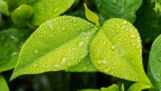 листкова діагностика рослин
