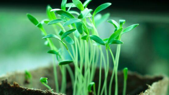 аналіз рослинного матеріалу