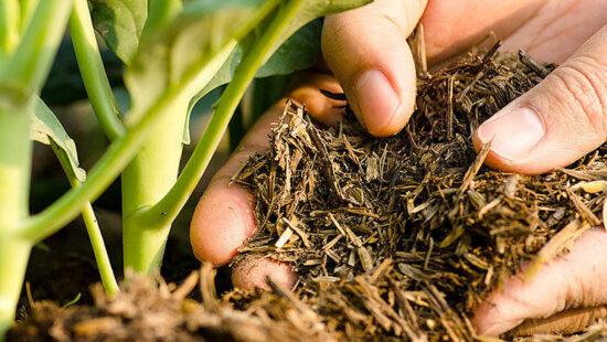 органическое удобрение под овощные культуры