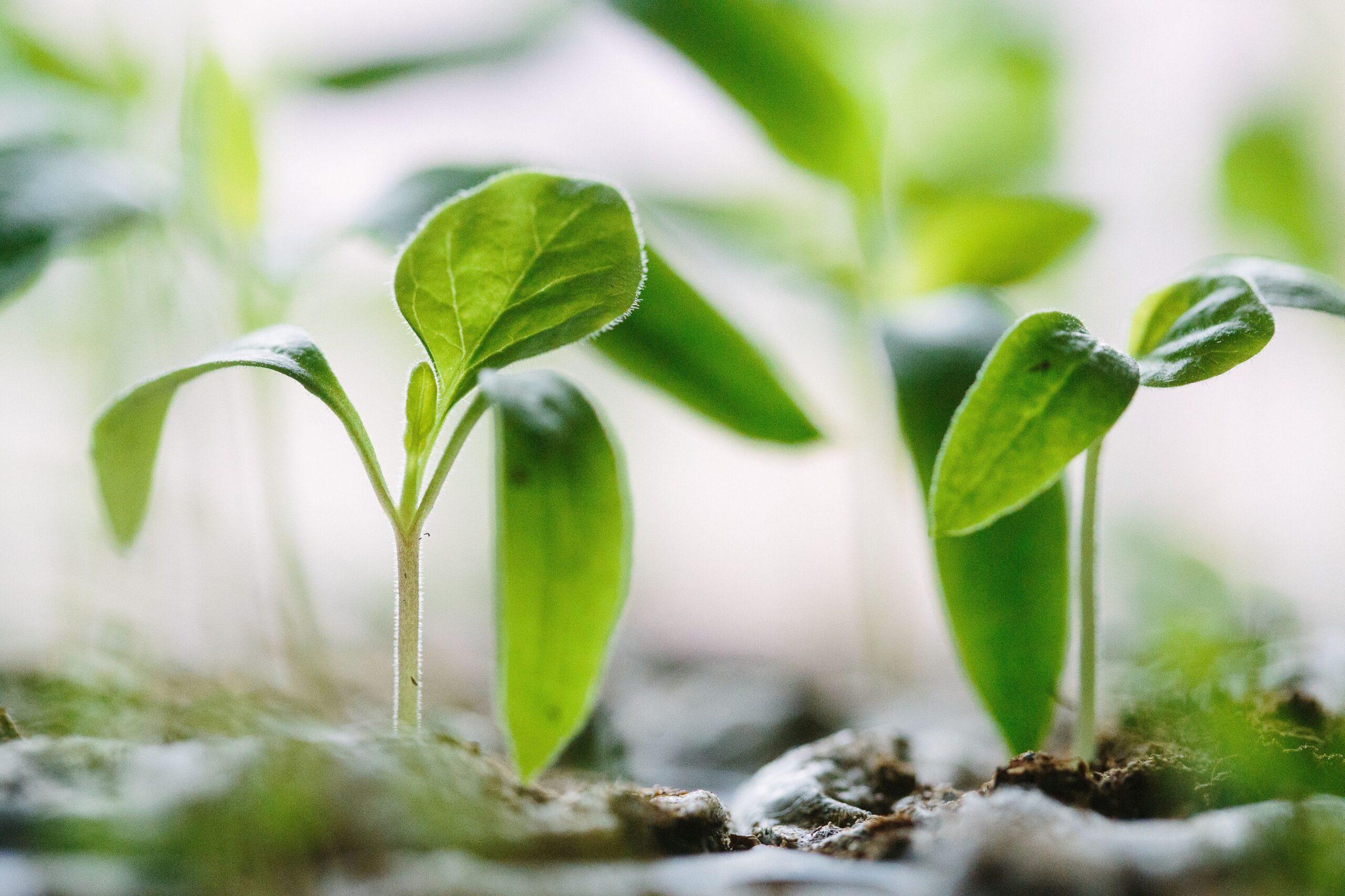 Оптимальный рост и развитие растений