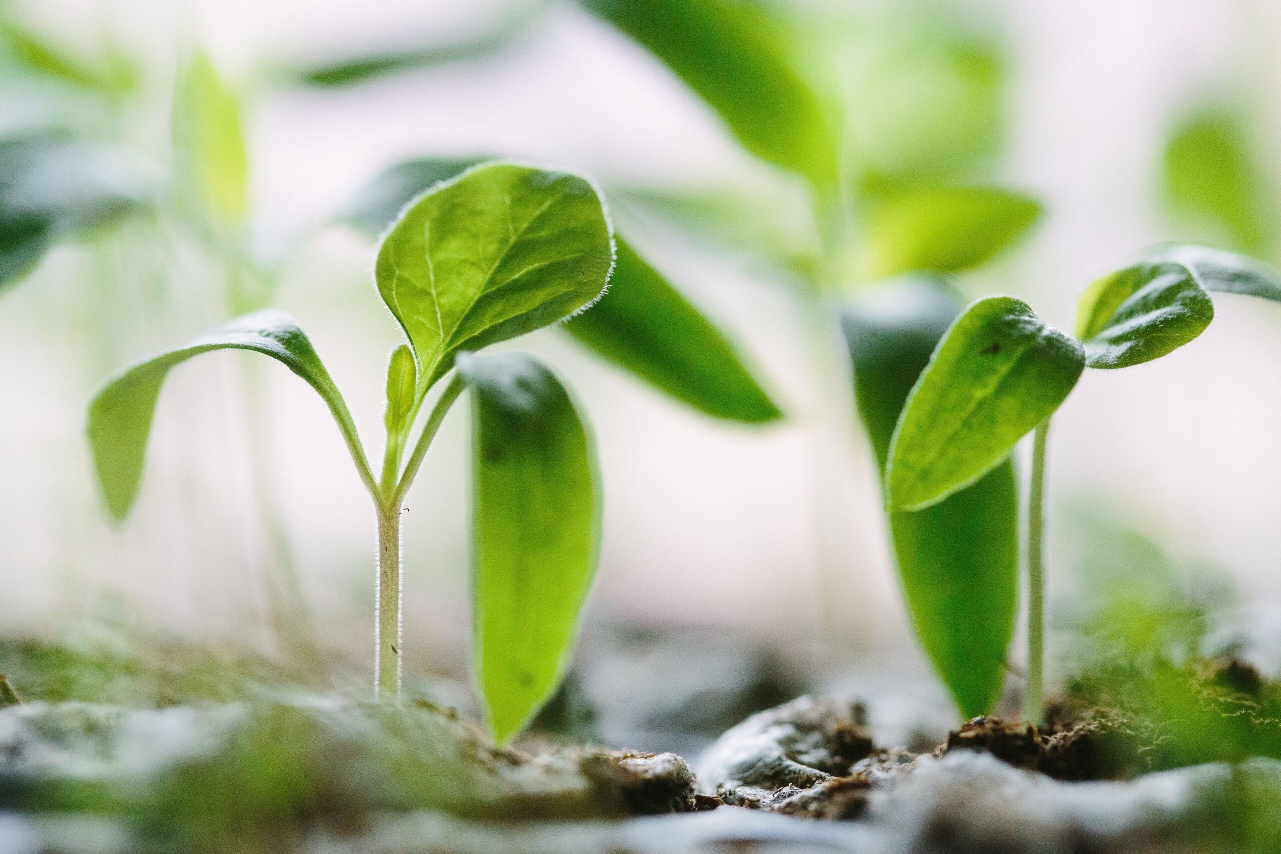 Забезпечення оптимального росту і розвитку рослин